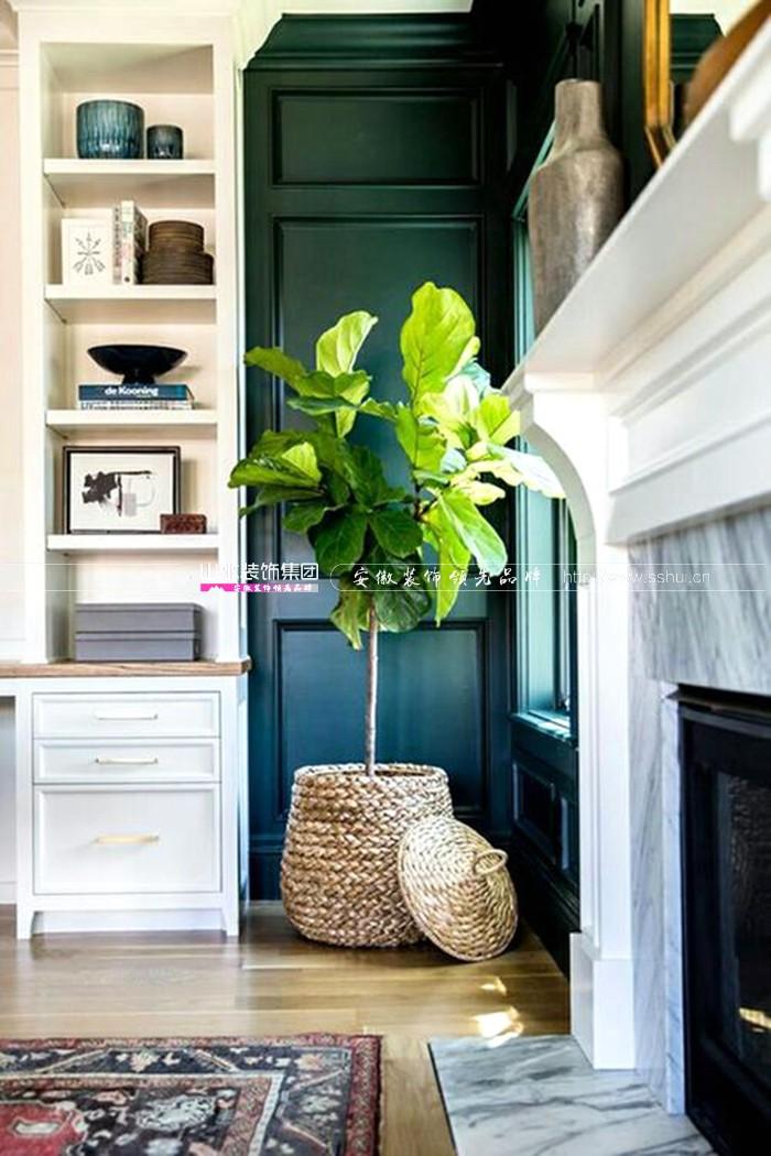 適合擺放在家里的綠植